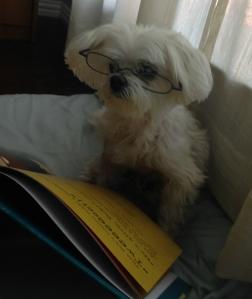 Harry_reading