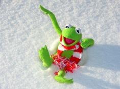 snow kermit-70115_640