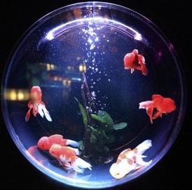 fish-bowl-846060_640